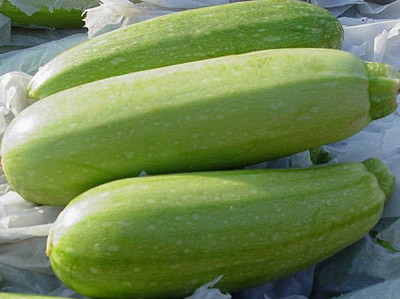 Asian Melon 63